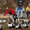 Kayla Green, 10, from left, Stormy Green, 13 and Emma Green, 8, all of Rogers, toss bread crumbs to ...