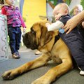 Lis Lopez, 3, of Rogers watches Wednesday as Brody Montgomery, 3 months, reaches over to Scout, a re...