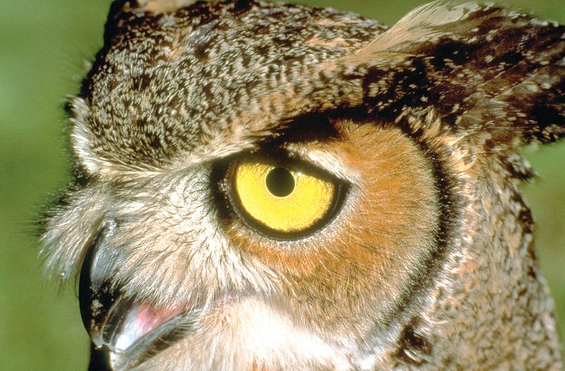 The whooo!, what, when, where and why of some of our most