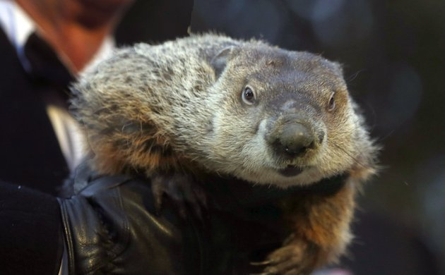 groundhog-club-co-handler-ron-ploucha-holds-the-weather-predicting-groundhog-punxsutawney-phil-after-the-club-said-phil-did-not-see-his-shadow-and-there-will-be-an-early-spring-during-the-groundhog-day-ceremony-saturday-feb-2-2013-in-punxsutawney-pa