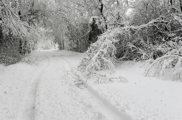 tree-limbs-lay-broken-by-heavy-wet-snow-on-wehmeyer-road-on-tuesday-feb-26-2013-after-another-winter-storm-dumped-about-eight-inches-of-snow-in-central-boone-county-mo-the-second-major-snowstorm-in-a-week-battered-the-nations-midsection-tuesday-dropping-a-half-foot-or-more-of-snow-across-missouri-and-kansas-and-cutting-power-to-thousands
