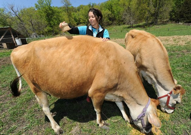 mariah-white-co-owner-of-summer-kitchen-family-farm-feeds-and-brushes-her-two-jersey-cows-scarlett-left-and-annalies-wednesday-april-24-2013-at-the-farm-in-south-fayetteville