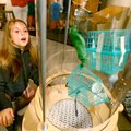 Lena Morstad, 10, of Fayetteville tries out a handson exhibit following a news conference Thursday, ...