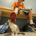 William Fogleman, 11, of Fayetteville watches as one of the many kittens up for adoption at the Wash...