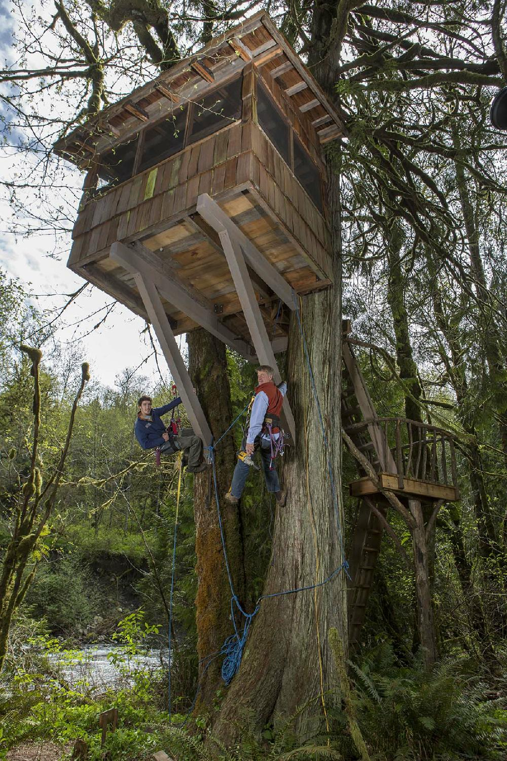 Treehouse Masters Irish Cottage the tv column: animal planet has designs for treehouse masters
