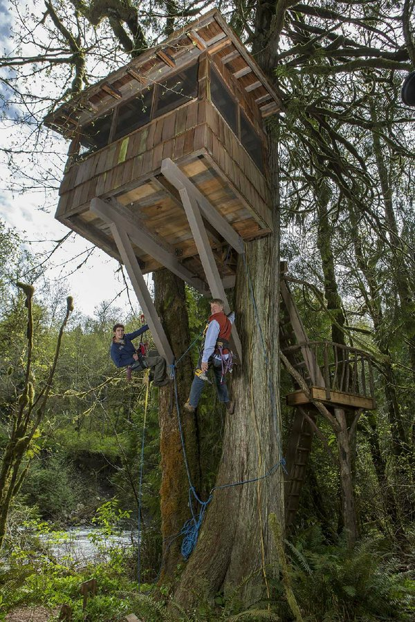 The Tv Column Animal Planet Has Designs For Treehouse Masters