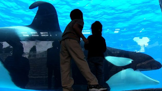 4-tilikum-in-a-scene-from-blackfish-a-magnolia-pictures-release-photo-courtesy-of-magnolia-pictures
