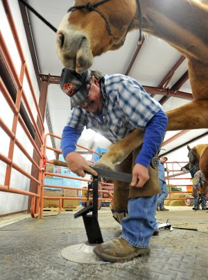 Dave Ward from Prior Oklahoma works on shoeing a horse Thursday evening during a horse shoeing class at Don Harp Carriage House at Parsons Stadium in Springdale.  NTI made an agreement with Parson's Stadium so they can have a permanent location for their horseshoeing class.