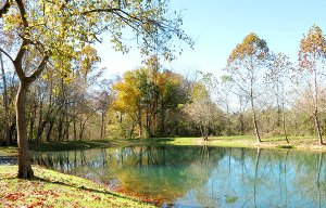 Photo by Randy Moll  Fall colors were reflected in the waters of the newly-constructed pond in the Flint Creek Nature Area on city-owned property on the south side of Gentry. The two shallow ponds were dredged into one larger pond deep enough to support fi shing.