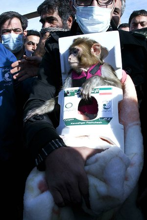 The monkey Fargam, or Auspicious, reached a height of about 72 miles in a small capsule launched by a liquid-fuel rocket.