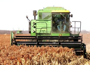 Photo by Randy Moll A pair of combines from the Haak Farm in Gentry harvested milo from fields on the southwest edge of Gentry on Dec. 18.