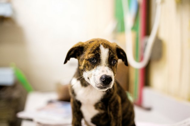 mixed-breed-dogs-like-this-one-fill-animal-shelters-across-the-area-the-pull-of-their-cute-faces-convinces-some-people-to-adopt-them-or-cats-from-a-shelter-without-realizing-the-commitment-such-a-move-requires