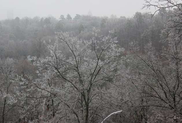 ice-coats-trees-at-knoop-park-in-little-rock-thursday