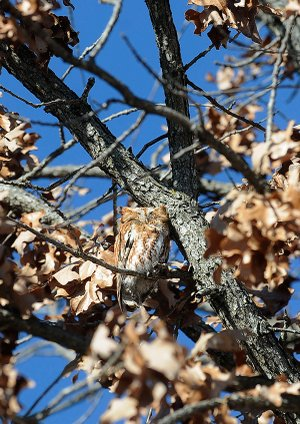 STAFF PHOTO FLIP PUTTHOFF 