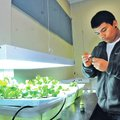 Cesar Marquez checks the pH level Wednesday where vegetables grow in Susan Johnston's classroo...