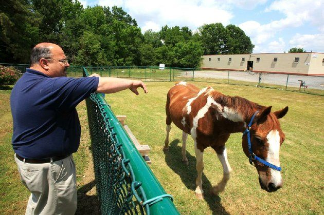 in-this-may-2012-file-photo-little-rock-animal-services-manager-tracy-roark-points-out-the-injuries-of-a-rescued-horse-that-was-being-kept-at-the-little-rock-animal-village-roark-was-recognized-tuesday-may-6-2014-as-little-rocks-employee-of-the-year