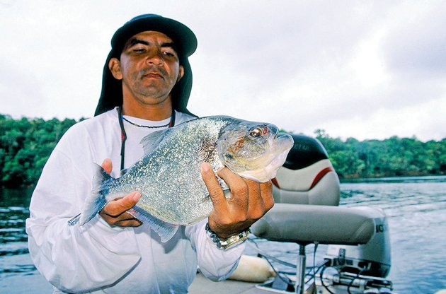 fishing-guide-wilson-rodriguez-displays-a-big-piranha-caught-by-keith-sutton