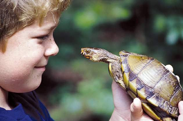 keith-suttons-son-zach-is-eye-to-eye-with-a-box-turtle-children-who-experience-nature-up-close-like-this-will-spend-more-time-outdoors-and-less-time-playing-video-games-and-watching-tv