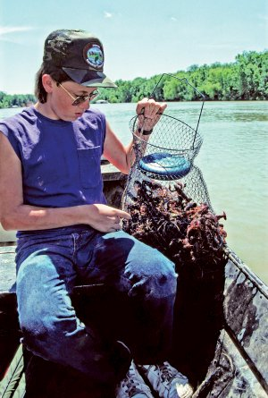 Josh Sutton, Keith Sutton's son, shows off a wire fish basket full of crawfish caught by hand along the lower White River.