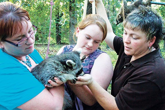 angela-spears-from-left-holds-scratch-the-raccoon-as-spears-daughter-morgan-and-wife-charlie-give-the-animal-some-attention-scratch-is-being-rehabilitated-by-the-family-he-was-kept-as-a-pet-and-needs-to-relearn-caution-toward-humans-before-he-is-released-back-into-the-wild