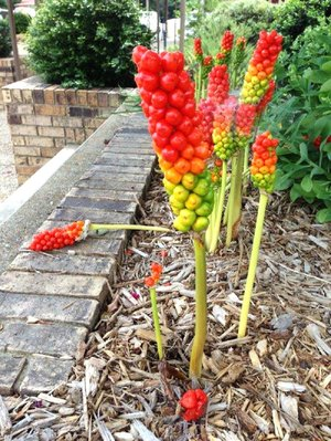 Special to the Democrat-Gazette/JANET B. CARSON