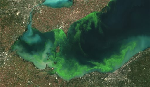 this-satellite-image-provided-by-noaa-shows-the-algae-bloom-on-lake-erie-in-2011-which-according-to-noaa-was-the-worst-in-decades-the-algae-growth-is-fed-by-phosphorus-mainly-from-farm-fertilizer-runoff-and-sewage-treatment-plants-leaving-behind-toxins-that-have-contributed-to-oxygen-deprived-dead-zones-where-fish-cant-survive-the-toxins-can-kill-animals-and-sicken-humans-ohios-fourth-largest-city-toledo-told-residents-late-saturday-aug-2-2014-not-to-drink-from-its-water-supply-that-was-fouled-by-toxins-possibly-from-algae-on-lake-erie