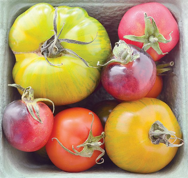 carefully-cultivated-heirloom-tomatoes-come-in-a-wide-range-of-sizes-shapes-and-striking-colors