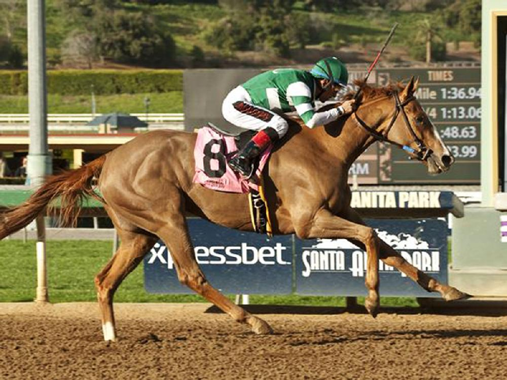 Santa Anita Today Video
