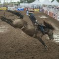 Will Lowe, Canyon, Texas, rides Miss Dunny Thursday in the bareback riding competition at the 71st R...