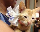 Cat survives crash in engine, is adopted