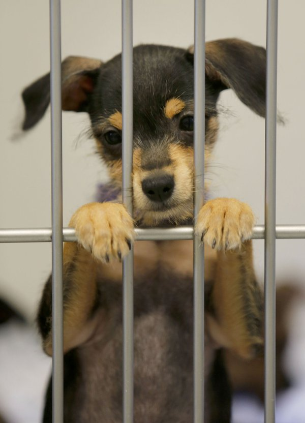 Washington County Animal Shelter Request Stokes Concerns Before Meeting
