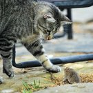 cat and mouse nw daily_002