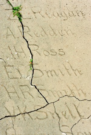 Grass grows through cracks in the hand-inscribed 1907 section of the Senior Walk at the University of Arkansas at Fayetteville. UA officials plan to replace portions for the years 1876-1924.
