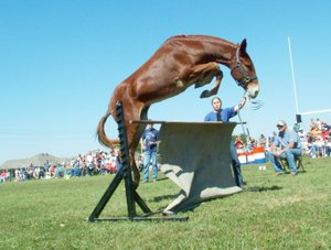 Mules jump during ...