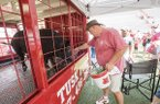 Keith Stokes of Dardanelle feeds Tusk, Arkansas' live mascot, on Sunday, Aug. 16, 2015, at Razorback Stadium in Fayetteville.