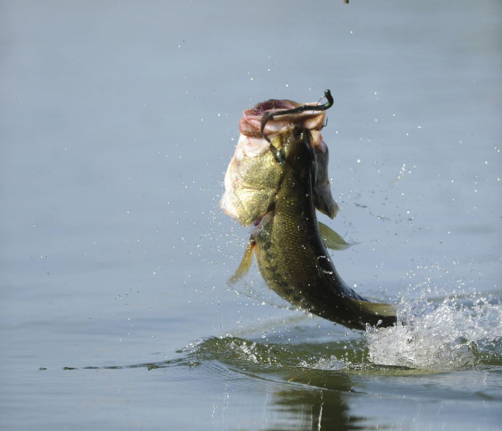 Oct 24 and 25 bass fishing tournament heber springs for Bass fishing websites