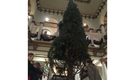 VIDEO: 31-foot Christmas tree arrives at Capital Hotel