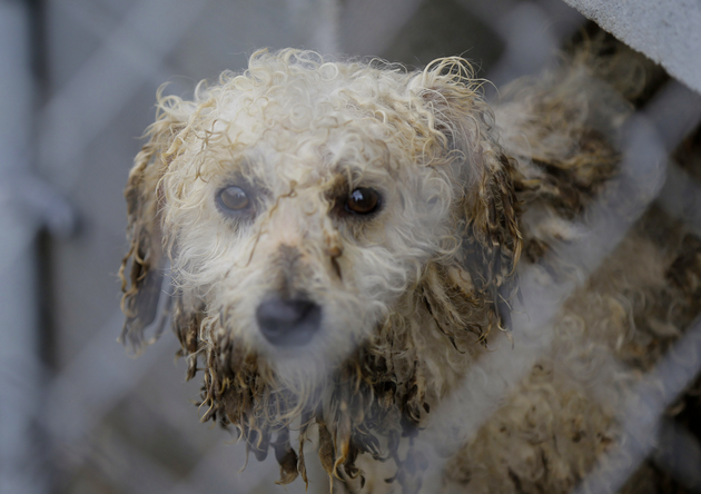 a-muddy-mid-sized-dog-watches-during-an-animal-rescue-thursday-march-3-2016-in-madison-county-brandon-wadeap-images-for-the-humane-society-of-the-united-states