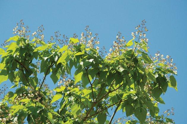 Plant Your Own Backyard Bait Tree
