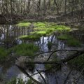 Sunlight falls on clumps of rice cutgrass Wednesday in one of a handful of ponds in the Kessler Moun...