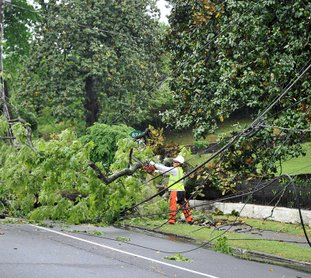The Sentinel-Record/Mara Kuhn DOWNED TREE: Emergency crews clear a downed tree Saturday at 824 Park Ave. Downed trees or power lines were reported in numerous locations in the county on Saturday.