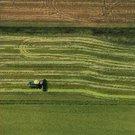 biz rice aerial2