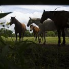 wild art horses01