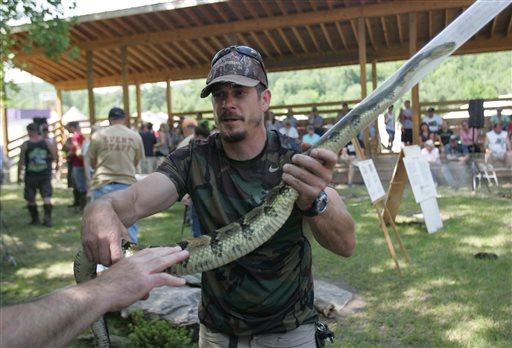 photo  yearly rattlesnake roundup event yields dozens of