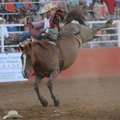 Tim O'Connell of Swingle, Iowa, holds on as he rides Jesse's Girl while competing Saturday in the ba...