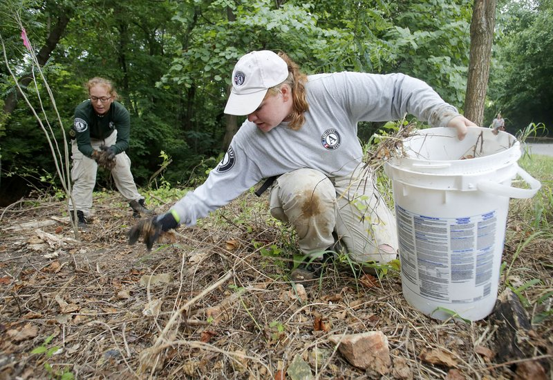 AmeriCorps team removes invasive species from Scull Creek