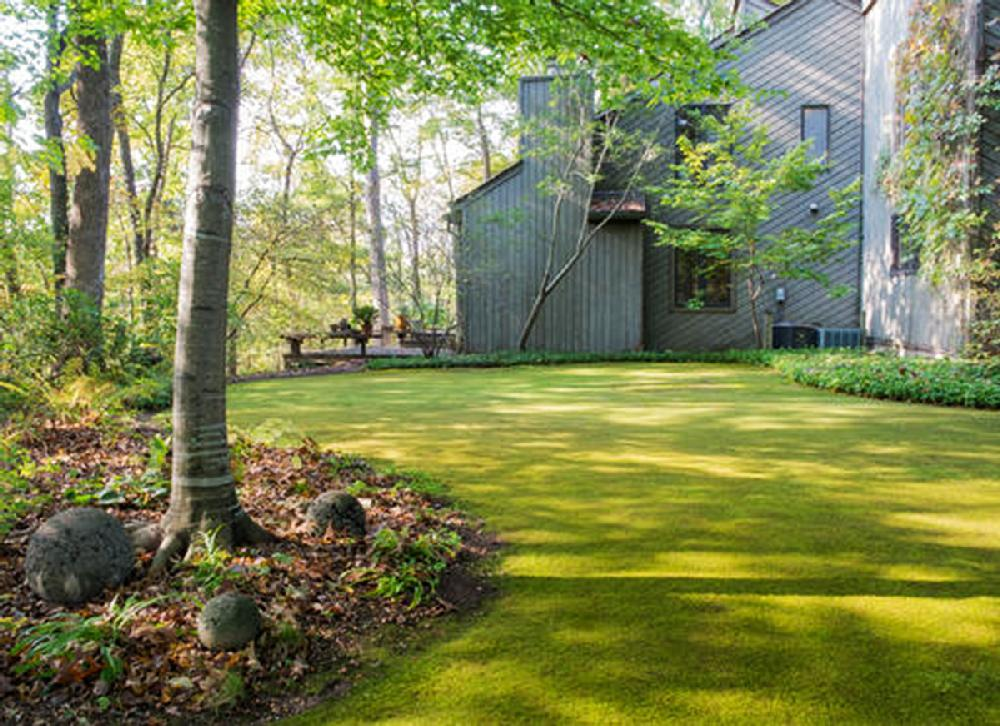 Moss garden, lawn simple, green, cool   NWADG