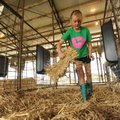 Emma Grace Kelley of Prairie Grove spreads straw Saturday while preparing a pen for her goats which ...