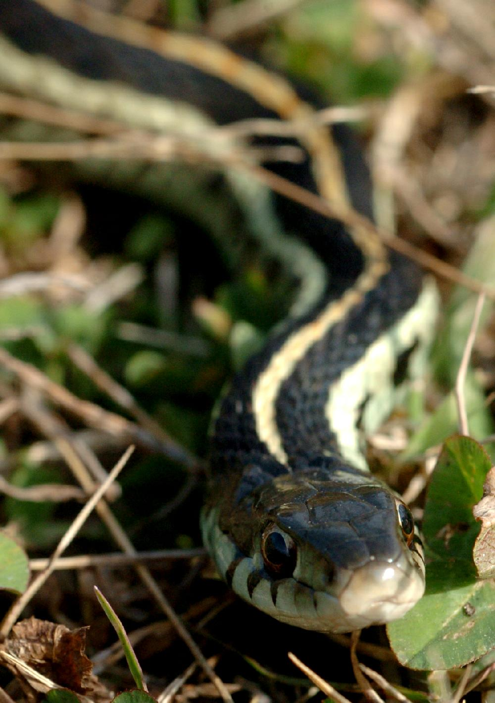 sssinuous friends snakes help humans by devouring disease