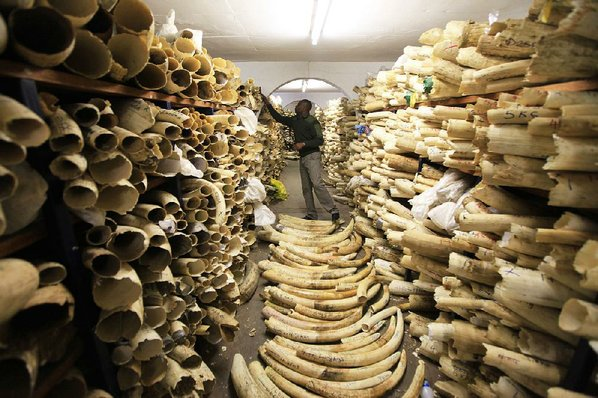 Ivory ban may be lifted despite plunge in elephant numbers